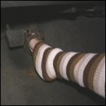 Kas Revving Camaro in Leg Warmers & Peep Toes